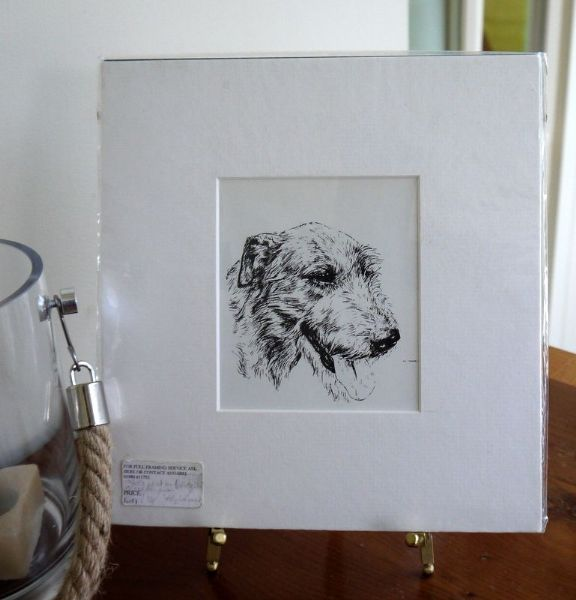 Irish Wolfhound - head - IW O1 - 1960's print by Bridget Olerenshaw
